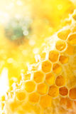 Sweet honeycomb with honey Stock Images