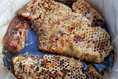 Sweet honeycomb with honey Stock Photography