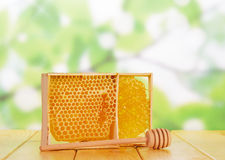Sweet honeycombs with honey Royalty Free Stock Photos