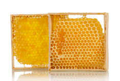 Sweet honeycombs with honey Royalty Free Stock Photo