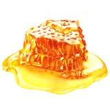 Sweet honeycombs with honey, isolated on white. Sweet honeycombs with honey, watercolor painting on white background Stock Images
