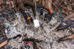 Sweet and hot marshmallows on a stick over the bonfire Stock Images
