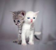Sweet hug Royalty Free Stock Images