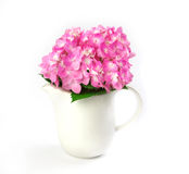Sweet  hydrangea flowers in white vase on a white background Royalty Free Stock Photos