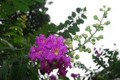 Flowers in Bangladesh.jatio press club field. Stock Photos