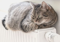 Sweet independent grey cat lies on warm radiator in bright room. Stock Images