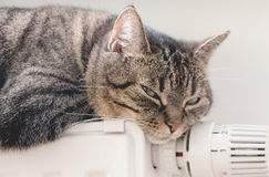 Sweet independent grey cat lies on warm radiator in bright room. Stock Photography