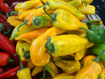 Sweet Italian Pepper, Capsicum annuum. Cultivar with long conical fruits, sold green or pale yellow, popular in Italian cuisines, mostly fried, slightly sweet stock photography