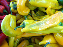 Sweet Italian Pepper, Capsicum annuum. Cultivar with long conical fruits, sold green or pale yellow, popular in Italian cuisines, mostly fried, slightly sweet stock image