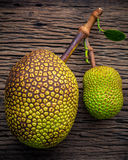 Sweet Jack fruit on shabby wooden background .Tropical fruit  sw. Eet and aromatic flesh of a ripe jack fruit ('Artocarpus heterophyllus') tempts buyers at a Stock Photography