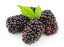 Sweet and juice blackberry Royalty Free Stock Photography