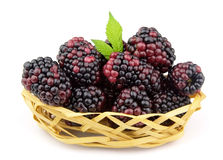 Sweet and juice blackberry Stock Image