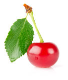 Sweet juicy cherry with green leaf Stock Photography