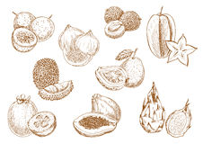 Sweet and juicy exotic fruits sketch icons Royalty Free Stock Photos