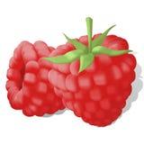 Sweet juicy ripe raspberries Stock Photography