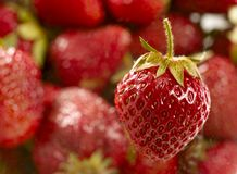 Sweet juicy strawberry Royalty Free Stock Image