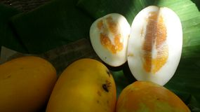 Sweet and juicy yellow Muskmelon Royalty Free Stock Photo