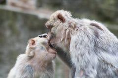 Sweet Kiss Royalty Free Stock Image