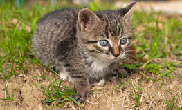 Sweet kitten Stock Images