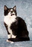 Sweet kitten Royalty Free Stock Photography