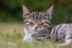 Sweet kitten in the grass stock photography