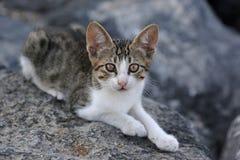Sweet Kitten Royalty Free Stock Photo