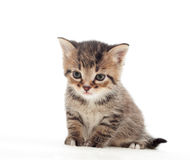 Sweet kitten Stock Photo