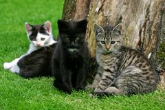 Sweet kittens Royalty Free Stock Photo