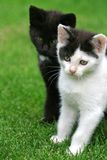 Sweet Kittens Royalty Free Stock Photography