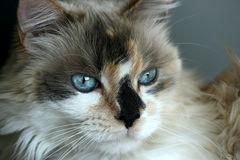 Sweet Kitty Royalty Free Stock Photography