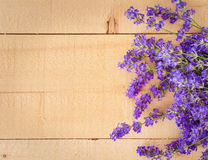 Sweet Lavender Flowers on Rough Wood Horizontal Royalty Free Stock Image
