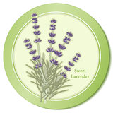 Sweet Lavender Herb Icon. Classic ingredient of French cooking herb blend, Herbes de Provence. Flowers for perfume. EPS8 compatible Stock Photos