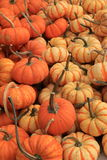 Sweet Lightening pumpkins Stock Image