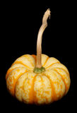 Sweet lightning pumpkin Royalty Free Stock Image