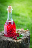 Sweet liqueur made of alcohol and redcurrants Stock Image