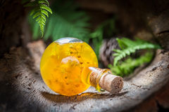 Sweet liqueur made of honey and linden in forest Royalty Free Stock Photos