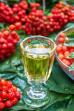 Sweet liqueur made from rowan berry Royalty Free Stock Image