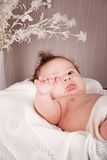 Sweet little baby infant toddler on blanket in basket Stock Image