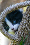 Sweet little black and white kitten. In the backyard Royalty Free Stock Image