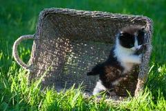Sweet little black and white  kitten. Sweet little black and white kitten  in the backyard Stock Photos