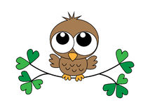 Sweet little brown baby owl Stock Images