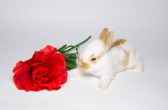 Sweet little bunny with rose royalty free stock photo