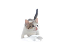 Sweet little Cat Royalty Free Stock Images