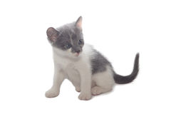 Sweet little Cats Royalty Free Stock Photo