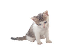 Sweet little Cats Royalty Free Stock Image