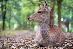 Sweet Little Deer Kid Fawn Looking to the Side with Sunshine in the forest with green background royalty free stock photo