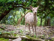Sweet Little Deer Kid Fawn Looking to the Side with Sunshine in the forest with green background royalty free stock photos