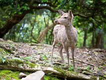 Sweet Little Deer Kid Fawn Looking to the Side with Sunshine in the forest with green background. Sweet Little Deer Kid Fawn Looking to the Side with Sunshine in stock image