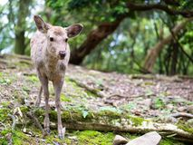 Sweet Little Deer Kid Fawn Looking to the Side with Sunshine in the forest with green background stock photo