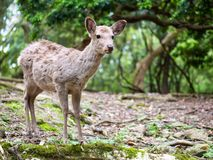 Sweet Little Deer Kid Fawn Looking to the Side with Sunshine in the forest with green background stock images
